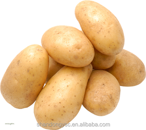 low price holland seed potato from China potato factory