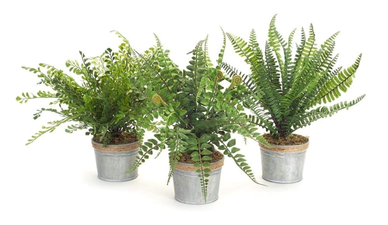 """Melrose Pack of 6 Artificial Assorted Country Rustic Potted Ferns 14.5"""""""