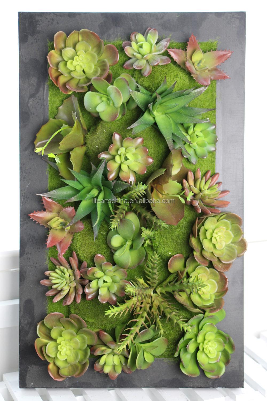 Plantas Suculentas Colgantes. Excellent Les Dejo Algunas Fotos De ...