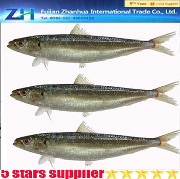 Fresh frozen sardine fish sardine fishing net for sale for Fishing net for sale