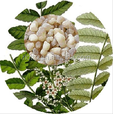 ru xiang 100% pure frankincense sale in Riotto with best quality!!!