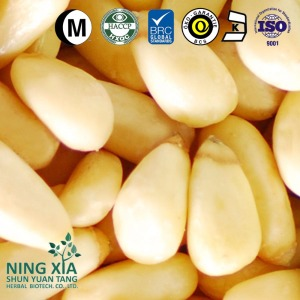 China Pine Nuts 2016 New Crop Cedar 980 shelled