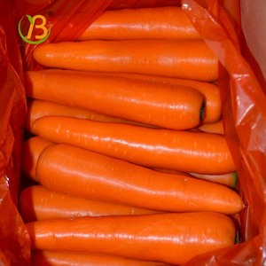 China fresh carrot hot selling