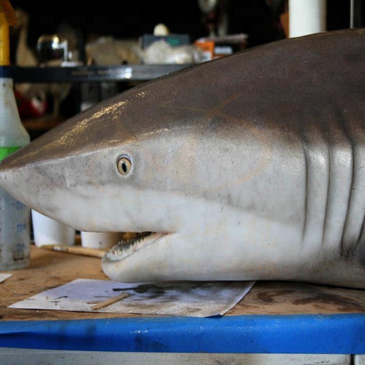 Finden Sie Hohe Qualitat Roboterhaifisch Hersteller Und