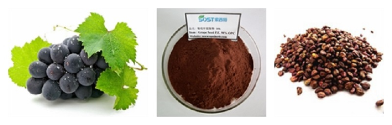 Wholesale Natural Organic Grape Seed Extract.jpg