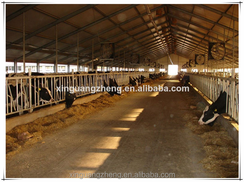 Dairy industry steel structure shed for cow breeding