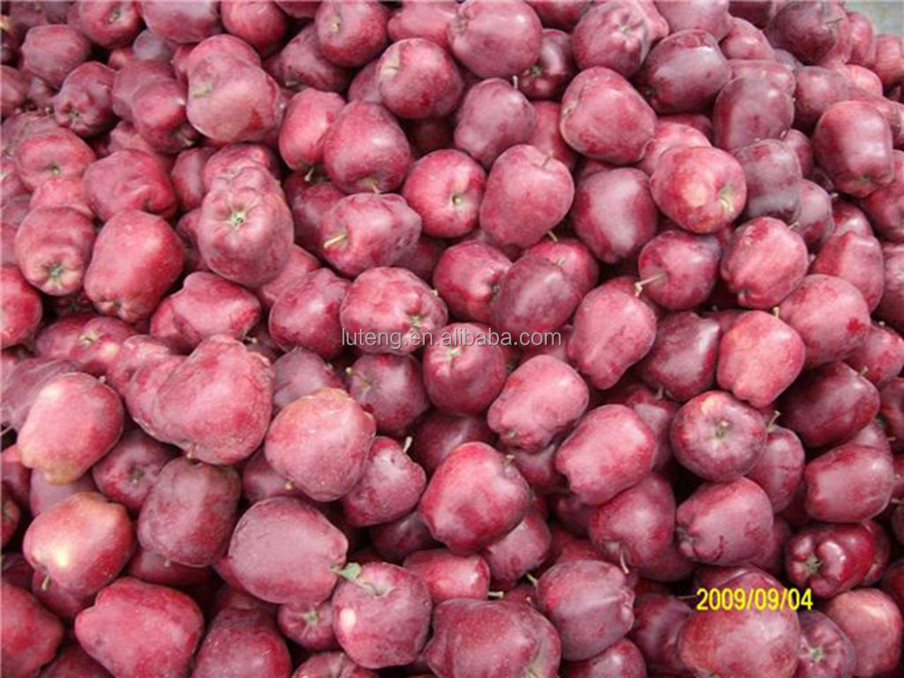 New Crop Huaniu Fresh Apple Names All Fruits