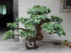 New design artificial pine tree bonsai for sale