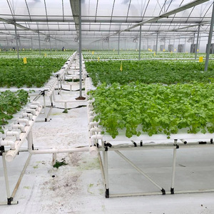 Saving water with NFT Hydroponic System for Tropical and Desertic Areas