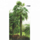 Outdoor artificial palm tree for landscaping hot sale decorative tree