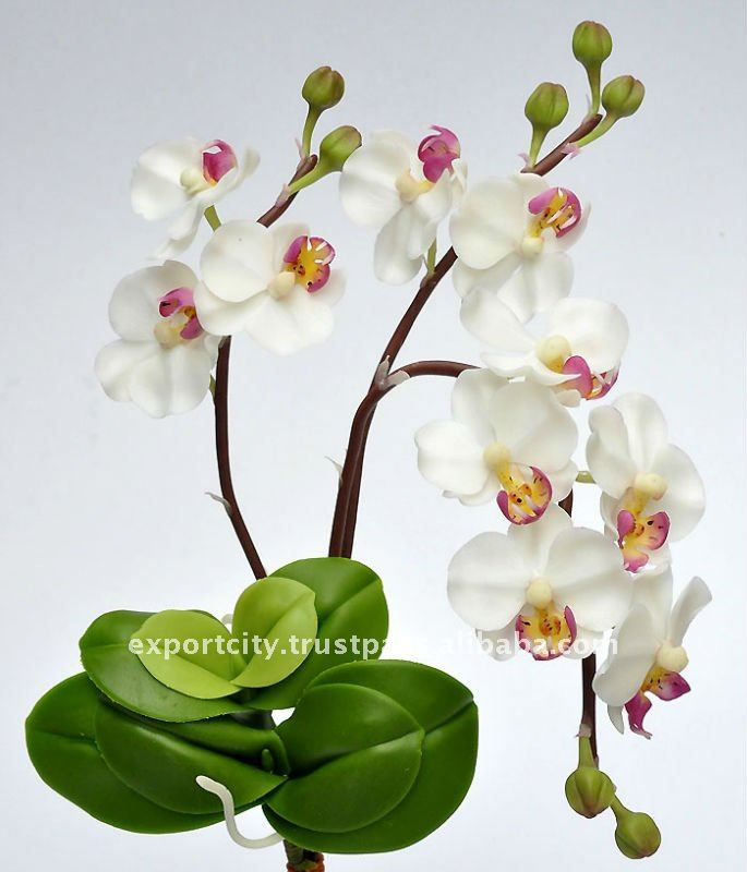 "Phalaenopsis Orchid ""m"" Artificial Flowers Thai Clay Handmade ..."