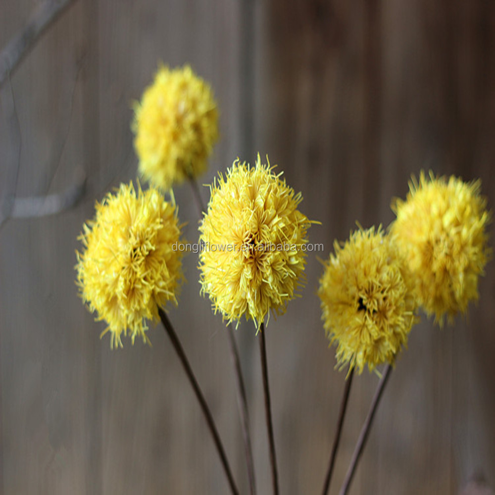 China Dried Ball Flower China Dried Ball Flower Manufacturers And