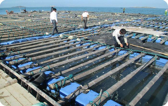 Uv protected china aquaculture tilapia fish farming cages for Fish farming business