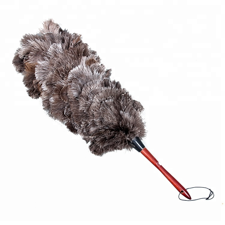 Feather Duster Clipart Stock Photography
