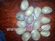 Ecuador Seed Dealers, Ecuador Seed Dealers Manufacturers and