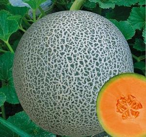 middle mature hami/musk melon seeds for sale