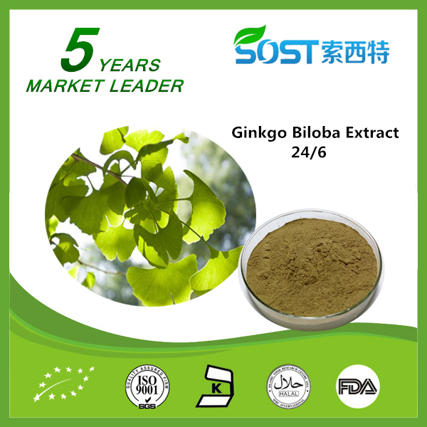 High Quality Cosmetic Raw Material Ginkgo Biloba Extract 60 mg