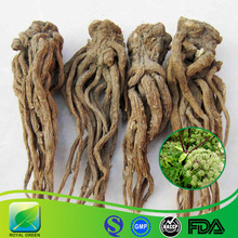 Best Offer Good Quality Keen Price Angelica sinensis
