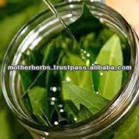 Natural Bay Oil For Hair Growth