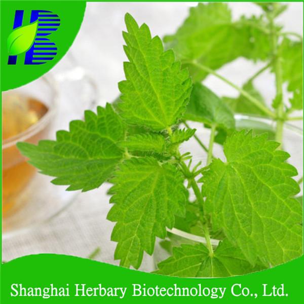 Top Quality Nettle Leaf Tea/nettle Tea