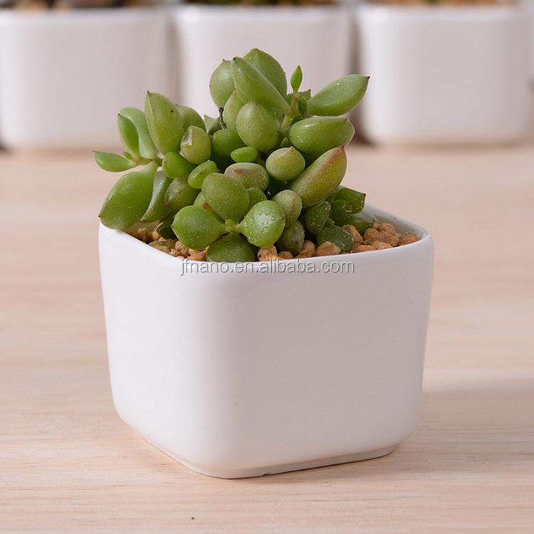 Creative Desktop Decoration Mini White Ceramic Flower Pots Product On Alibaba