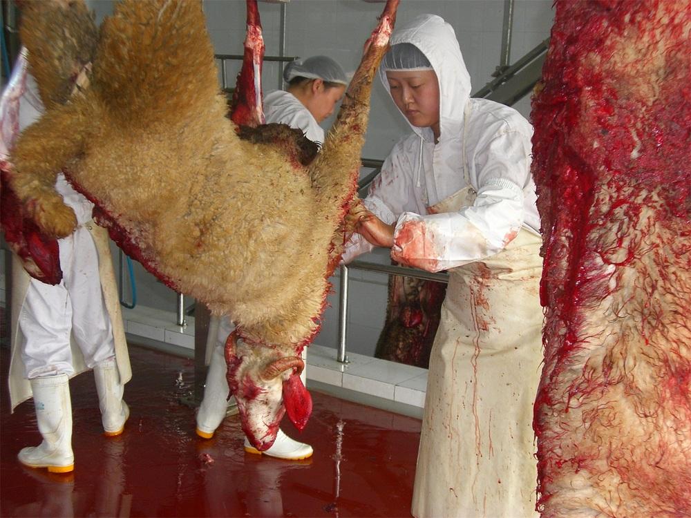 Sheep/goat Slaughter H...