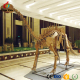 Most Popular Museum Replica Life Size Skeleton Dinosaur Model