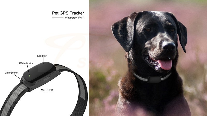Made In Japan Small Gps Tracking Device For Pets Dogs Cats Real ...