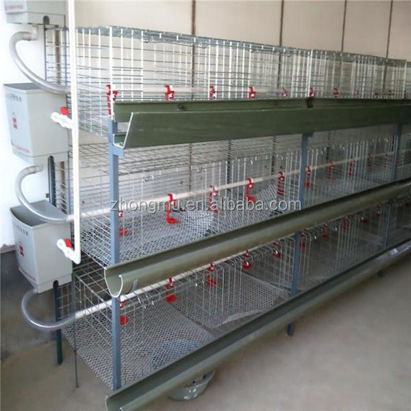 quail cage with automatic drinking system