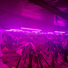 Amazon hot selling led grow light bar 2ft 4ft t8 t5 led tube light best for dragon fruit