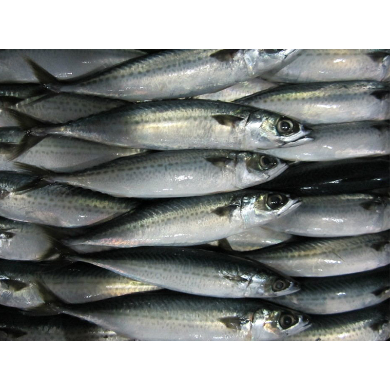 Wholesale IQF Frozen Mackerel <strong>Fish</strong> Prices