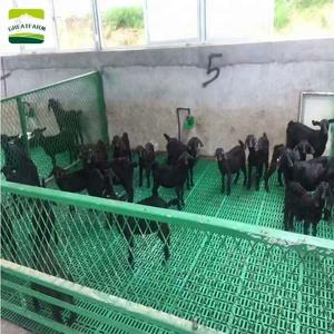 farming equipment plastic slat floor goat farm in tamil nadu