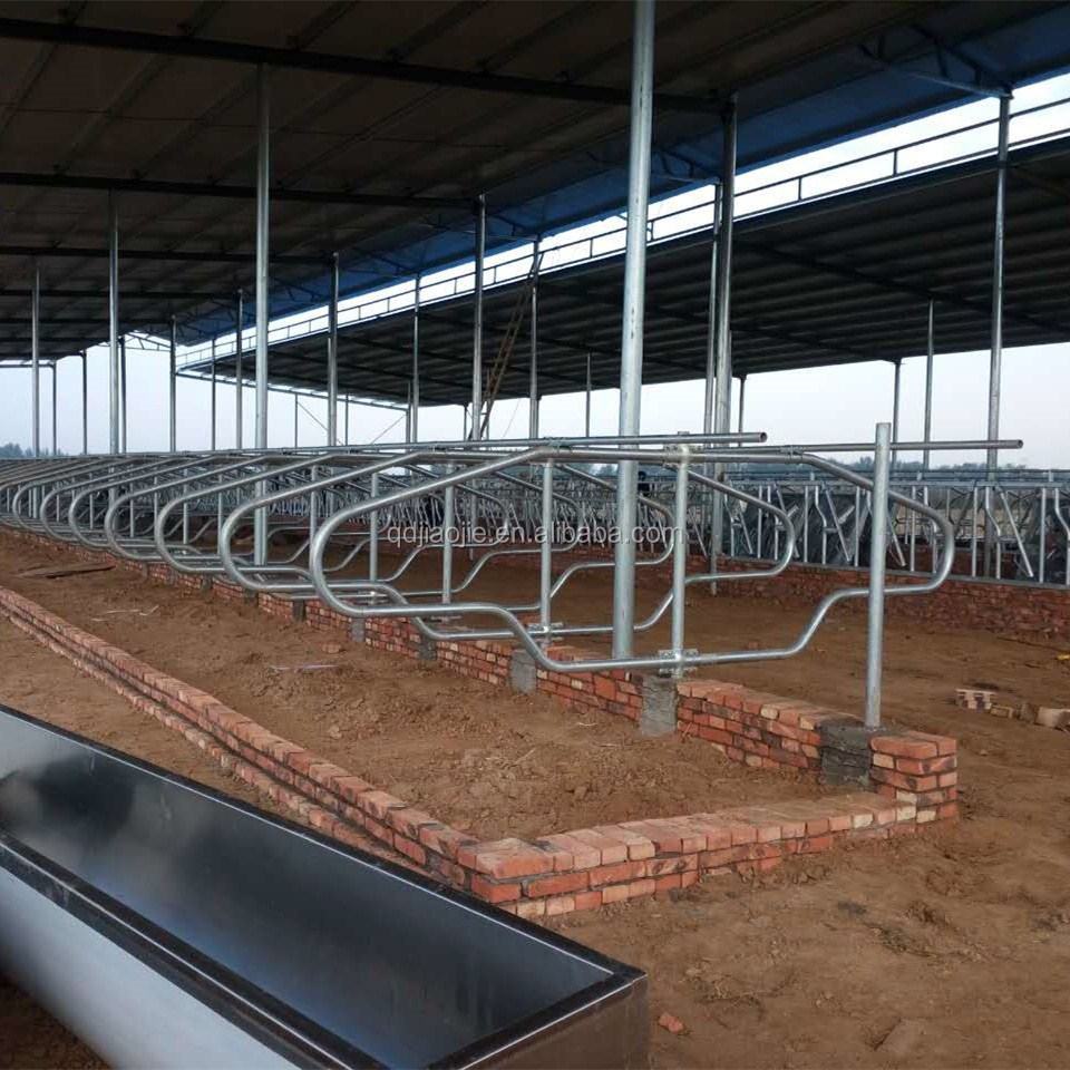 Dairy farm equipment live cattle galvanized cow free stall!