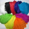 TN-01 55-60cm Cheap White and Colors Artificial Natural Female Ostrich Feather