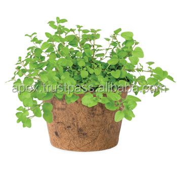 small plants for pots