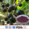 Pure 100% Natural Chinese traditional plant extract acai berry extract high quality