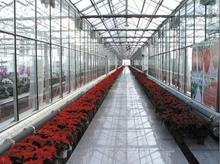 2012 new products LED grow light special for big greenhouse project100w to 600W