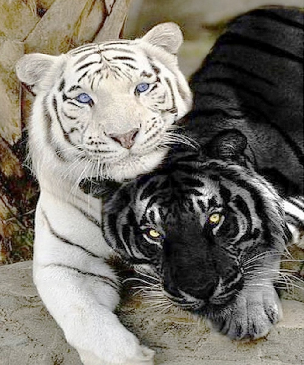 2015 Newest Diy 3d Diamond Painting Black And White Tiger font b Fabric b font For
