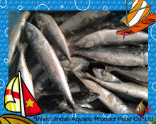 Frozen pacific mackerel, frozen mackerel fish, frozen food products
