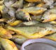 Frozen seafood,yellow croaker fish price frozen yellow croaker