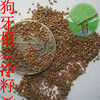 New High Quality Grass Seeds Bermuda Grass Seeds For Sale