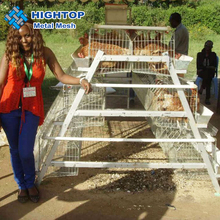 Wholesale price Hot dipped galvanized poultry A type layer chicken cage