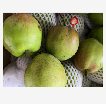 Wholesale Fresh Pear / Pear Fruit Price