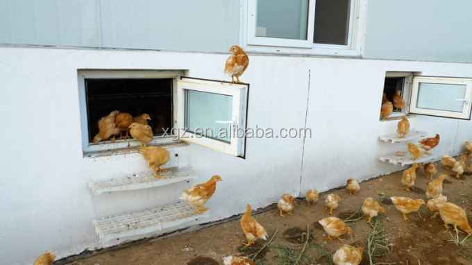 modern automated low price poultry shed farm