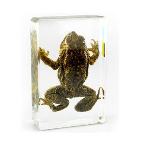 Resin Clear Crystal with Enclosed Real Toad