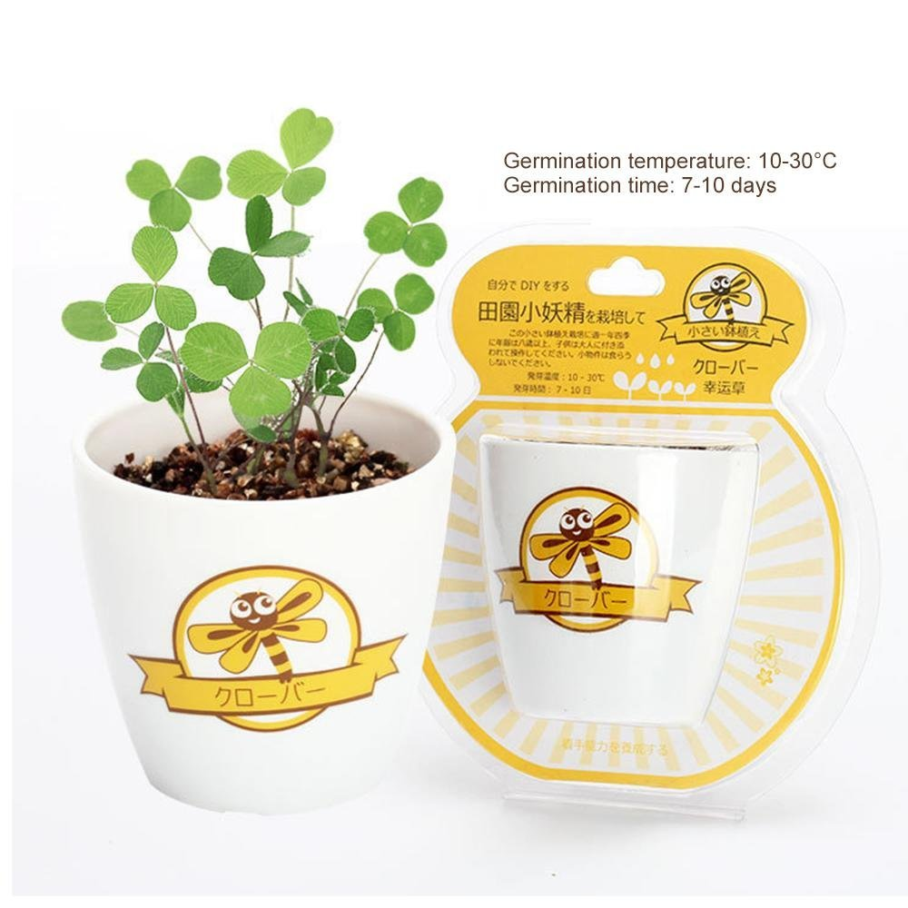 niceeshop Garden Seed Starter Kit, (TM) Small Flower Pots DIY Germination Plants Bonsai Planter for Ornaments Decoration - Seed, Plastic Pot, Cultivation Soil