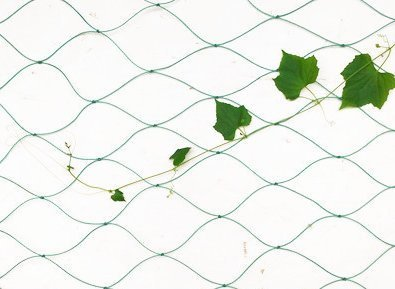 Mr.Garden Trellis Netting For Climbing Plants, Green Color (5.9Ft x 11.8Ft)