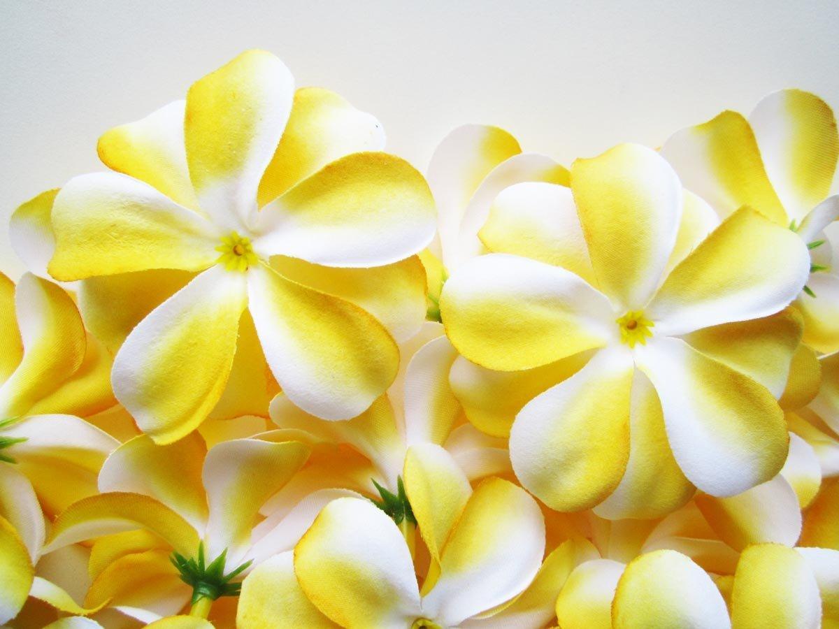 Buy 24 yellow white hawaiian plumeria frangipani silk flower heads 24 yellow white hawaiian plumeria frangipani silk flower heads 3 artificial flowers head fabric floral supplies wholesale lot for wedding flowers izmirmasajfo