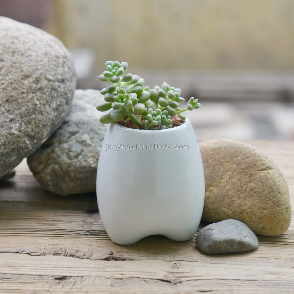 Lovely tooth shaped ceramic flower pot