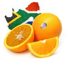 Import Agent of Navel Orange for Customs Clearance